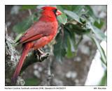 IMG_7676_Cardinal_11x100.jpg