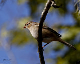 sparrow_id