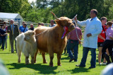 Cattle Show 2012