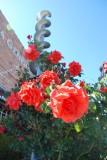 Napa Roses