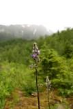 Nugget Falls Trail Wildflowers