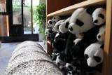 Plush Pandas Relocation Project