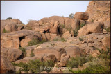 Ghazal_Valley_061103.jpg