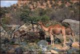 Ghazal_Valley_061104.jpg