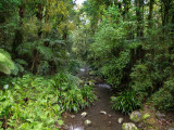 Queensland Rain Forest