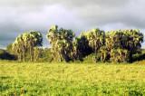 Palms on the South Gabon coast