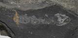 Palaeozoic Vertebrates