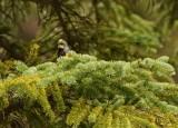 Rocky Mountain Birds