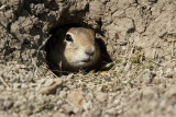 Small Furry Mammals