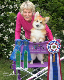Mayflower Pembroke Welsh Corgi Club AKC Agility Trial June 2011