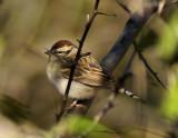yardbirds2007