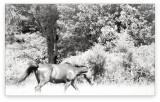 Warren Horse