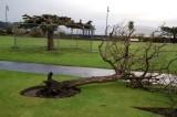 Wind Damage 03/01/2012