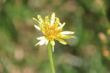 KNP_flora_1.jpg