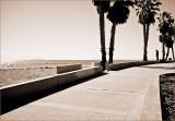 Boardwalk Trees