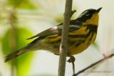 Spring 2012 Bird Migration