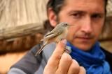1st summer female Subalpine Warbler and Cristian Jensen