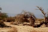 Habitat from arabian warbler