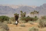 Vagando por el desierto de Israel