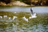 Athens Environmental Awareness Park