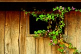 Window wall