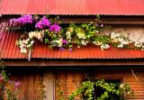 Flowers on rooff