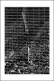 Espèce quasi-menacée (Chat de Geoffroy)