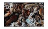 Graupuzzle de poulpes