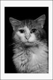 Jack, le chat  clochard