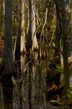 Cypress wetlands 0046