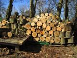 Terschelling wood