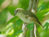 Birds -- Stratford, Ontario, August 2011