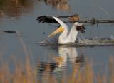 Birds -- Shoreline and PA Baylands, 2011 Workshop Tryout