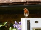 The House Robin