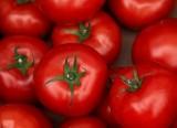 One Tomata, Two Tomata, Three Tomata Four