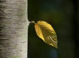 natural imaging 14