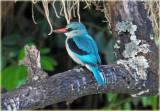 Kingfisher Woodland
