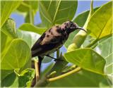 Sunbird 5