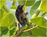 Sunbird 6