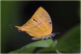 Butterfly_resize.jpg