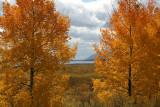 Fall colors - Grand Teton