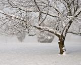 1/23/08 - Let it snowDSC_0217_aw.jpg