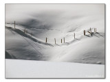 Winter Meadow / Weide in Winter (7296)