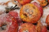 FRUITS BLETS