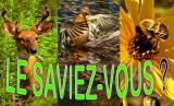 LE SAVIEZ-VOUS ? /  Did you know ?