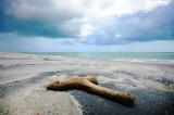 stranded driftwood
