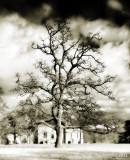 1754-Hogwart Tree