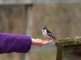 Spring Birds and Burlington Conservation Area Ontario