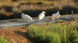 Diverse vogels - Several birds
