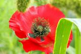 Flora / Flore